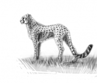 Cheetah sketch by Bloodywings