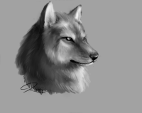wolf_close_up_sketch by Bloodywings