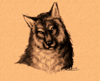 wolf_closeup_sketch by Bloodywings